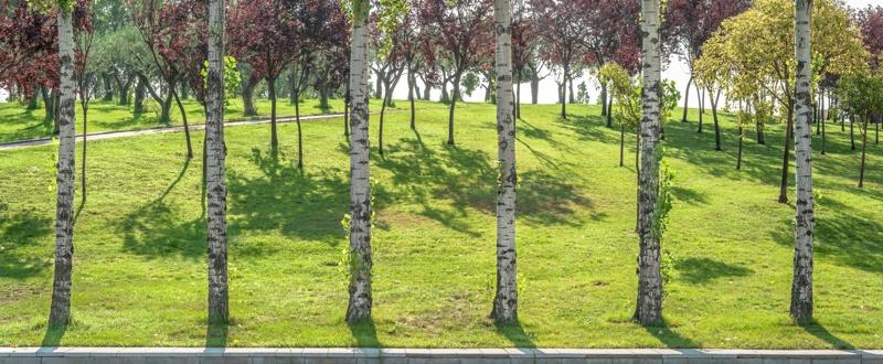 El Nus de la Trinitat Park