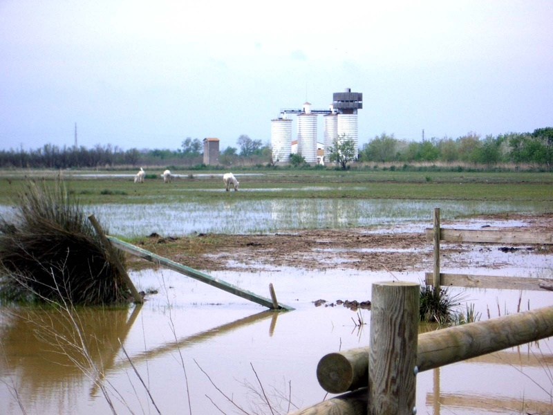 Observatories at the Empordà Wetlands